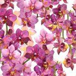 Gambar Bunga-054