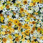 Gambar Bunga-063